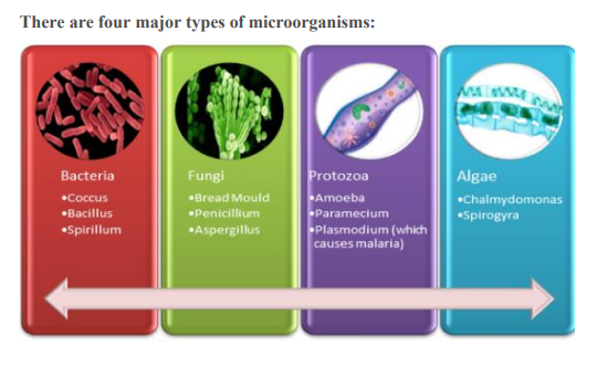 HOW MANY TYPES OF MICROORGANISMS ARE THERE