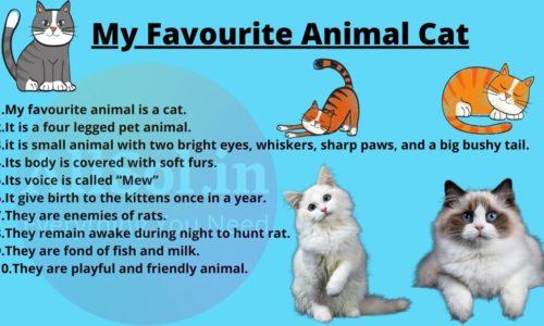My Favourite Animal Cat