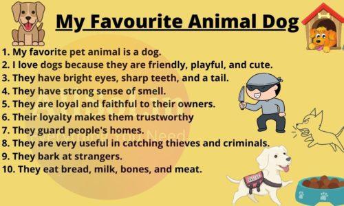 My Favourite Animal Dog