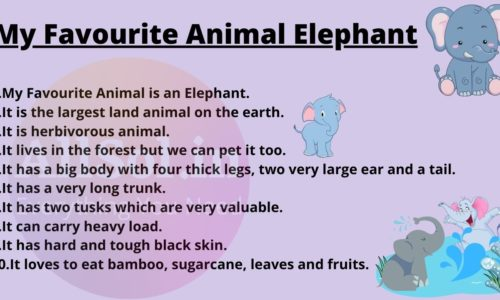 My Favourite Animal Elephant